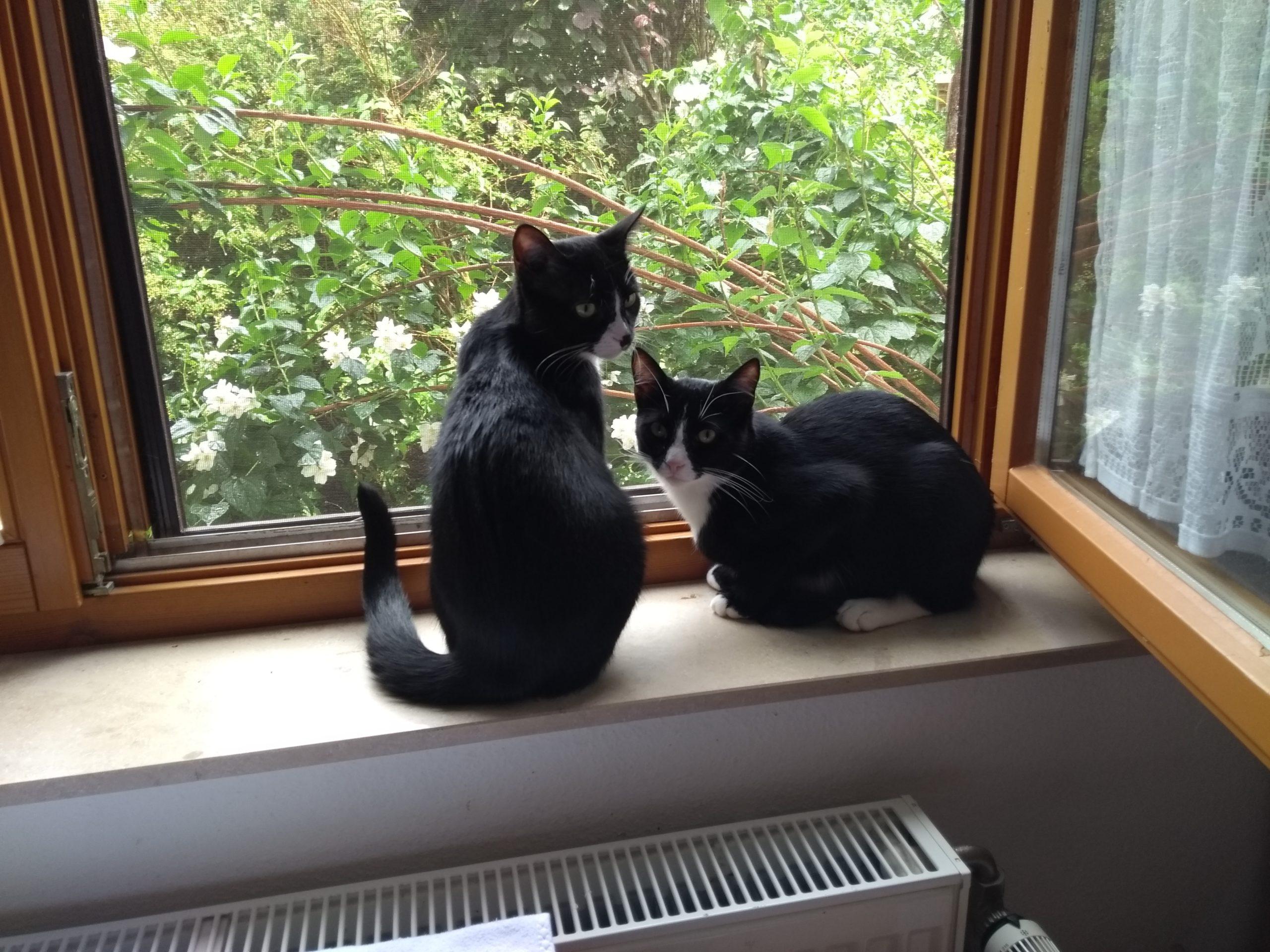 Tierfreunde Mössingen